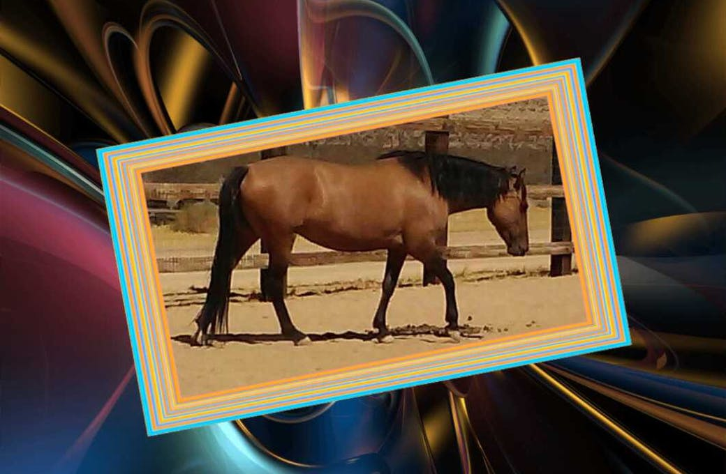Adobe Mountain Equine