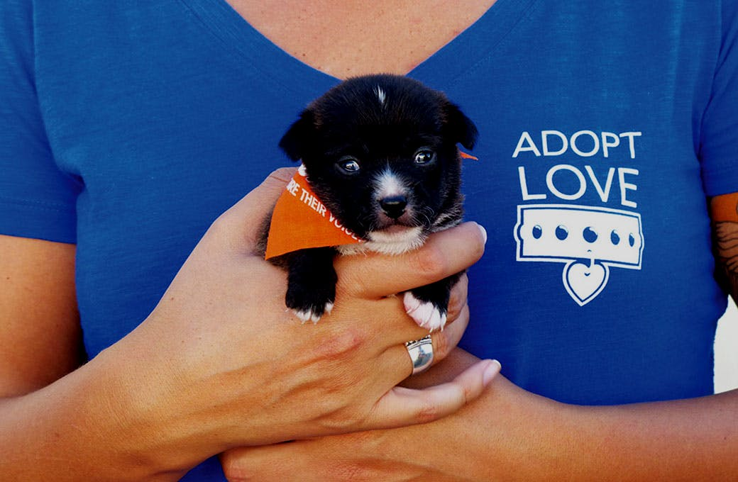 San Diego Humane Society - Goodworld | Hashtag donations on